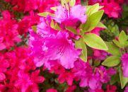 Viva como as Flores