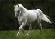 A Lição do Cavalo - Sacudindo a Terra