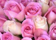 Chão de Rosas