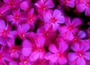 Amigos são Flores e Poemas