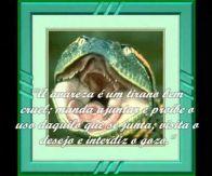 Avareza - Chico Xavier