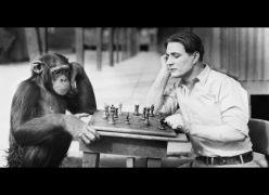 Proximidade genética entre macacos e humanos - Visão Espírita